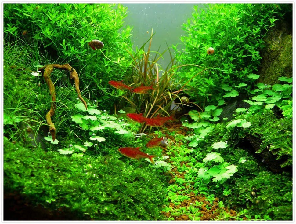 aquascaping-plants-970x733