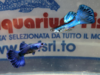 GUPPY MASCHIO BLU MIX